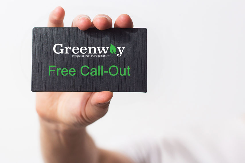 Free Call-Out